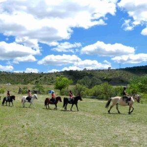 Children taking lessons in horse riding