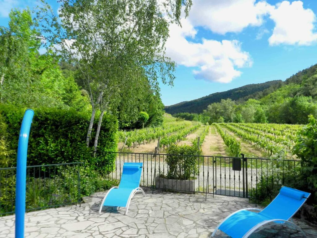 A view of the vineyard from the pool terrace